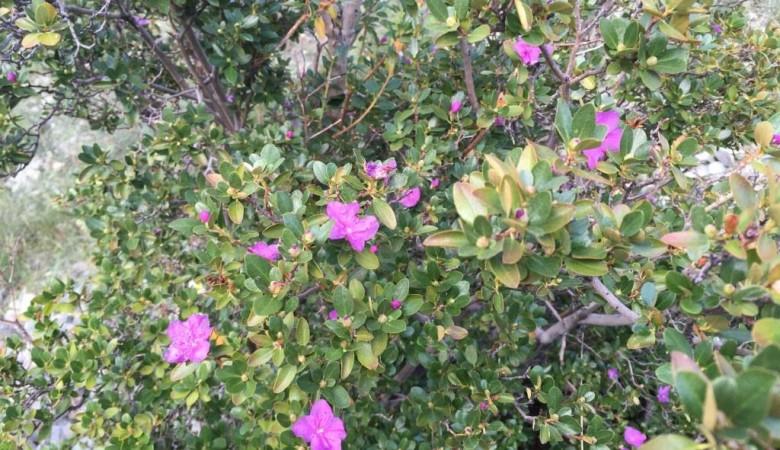 Из-за капризного лета в Саяно-Шушенском заповеднике раньше срока второй раз распустились весенние цветы