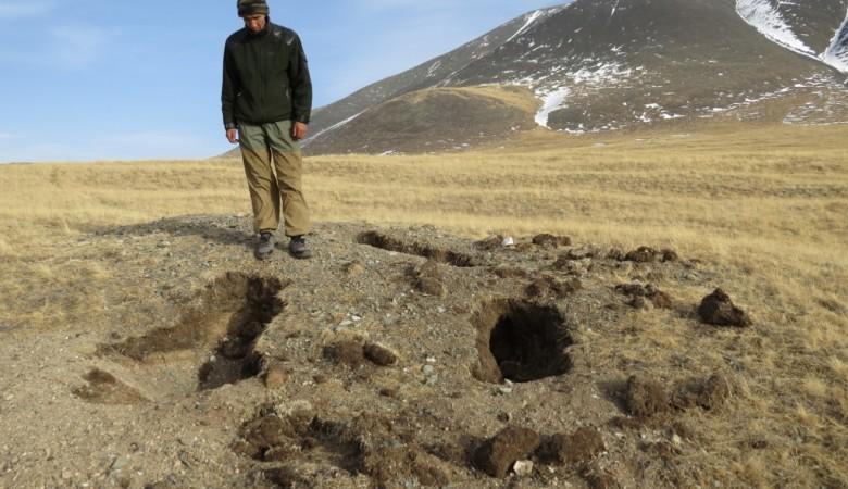 На Алтае обнаружили подвид медведя, который считали вымершим 30 лет