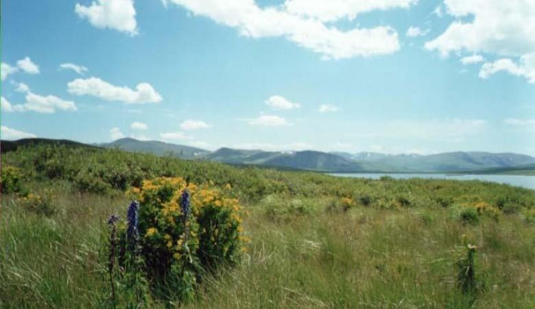 На Алтае работника заповедника осудили за браконьерство