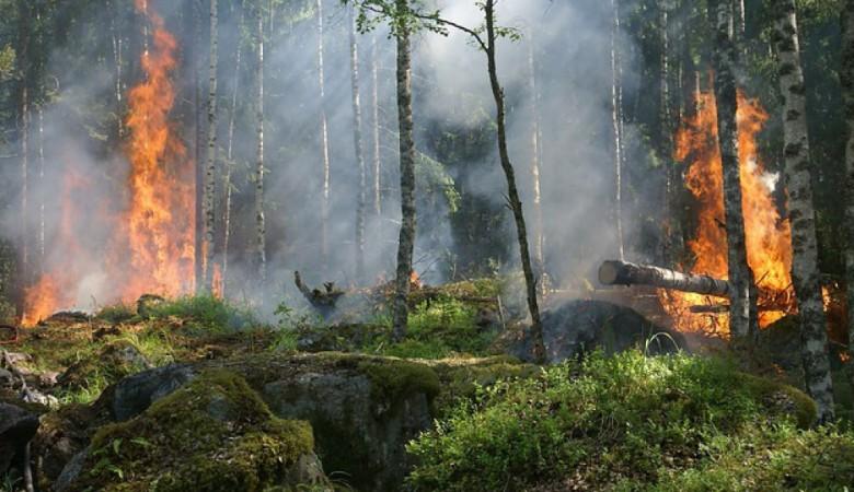 Алтайскому краю угрожают пожары с территории соседнего Казахстана
