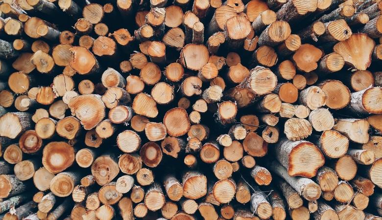 Суд приговорил главу лесничества в Томской области к шести годам колонии за взятки