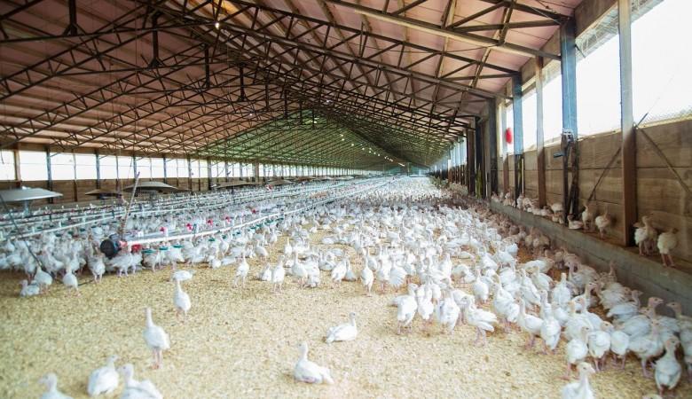 Работникам птицефабрики в Туве не платили зарплату четыре года