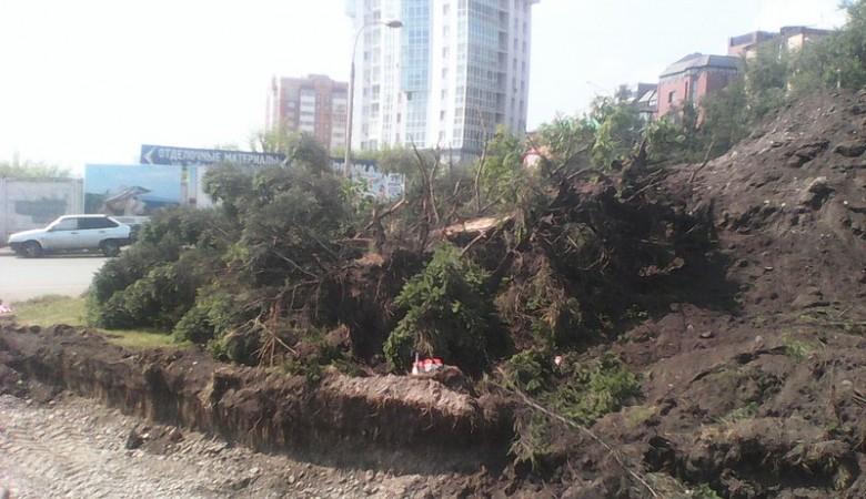 В Красноярске для расширения одной улицы снесли 1648 деревьев