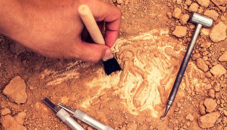 В Приангарье на раскопках обнаружили древние орудия труда, кости мамонтов и бизонов