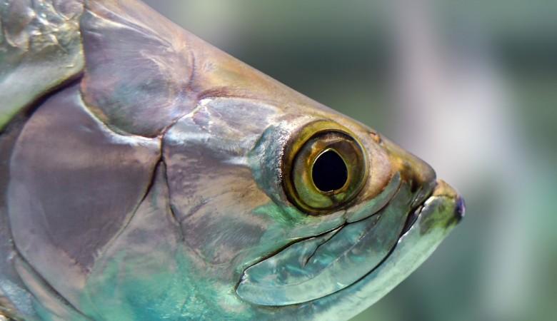 Розлив нефтепродуктов в Норильске приведет к обеднению кормовой базы для ценных рыб