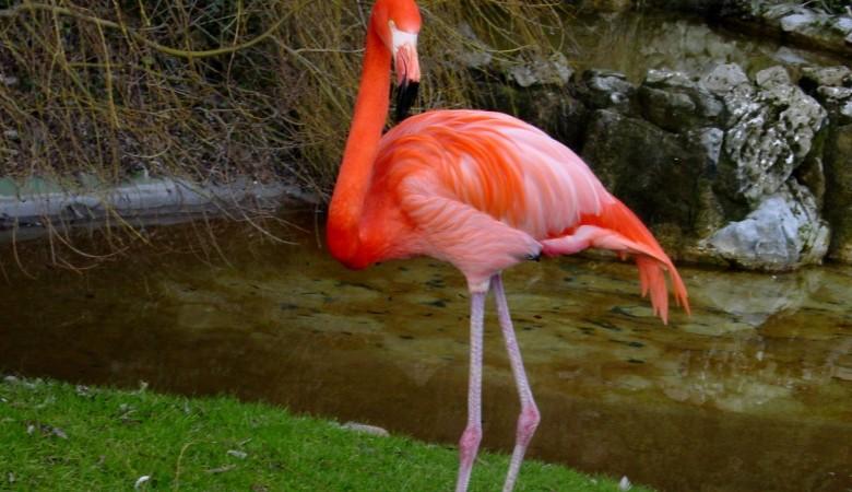 На Алтае спасли заблудившегося розового фламинго