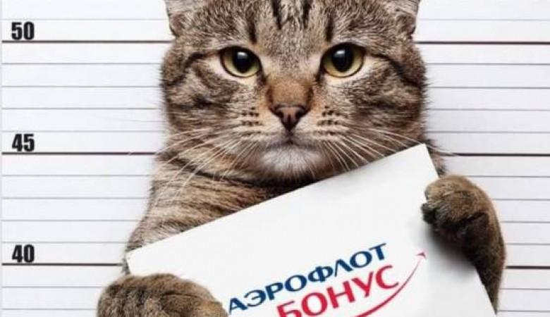Толстый кот, которого попросили сдать в багаж, стал героем мемов