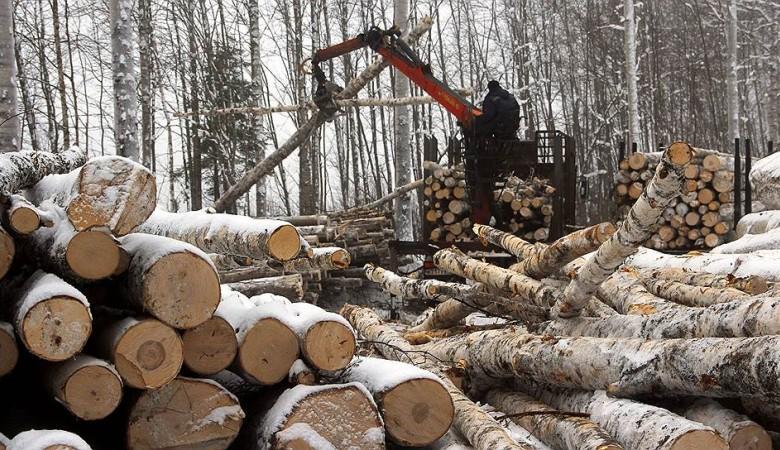 Правительство скорректировало параметры развития Богучанского ЛПК