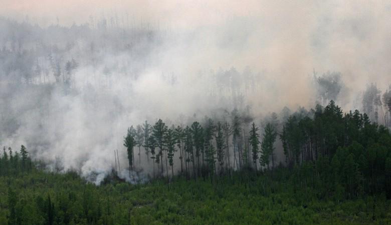 Прокуратура обнаружила, что лесные пожары в Бурятии не торопились тушить