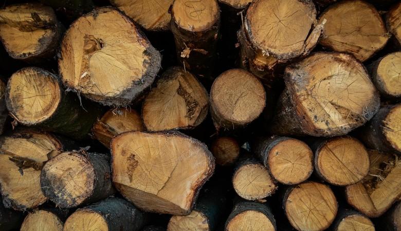 Лес на 400 млн рублей незаконно вывезли из Томской области
