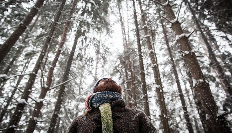 Томский губернатор уволил главу департамента лесного хозяйства после возбуждения дела