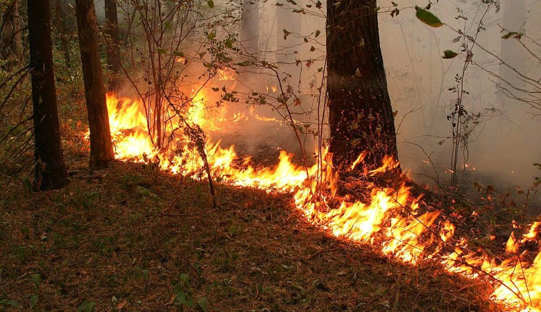 Площадь лесных пожаров в Иркутской области за сутки выросла на треть