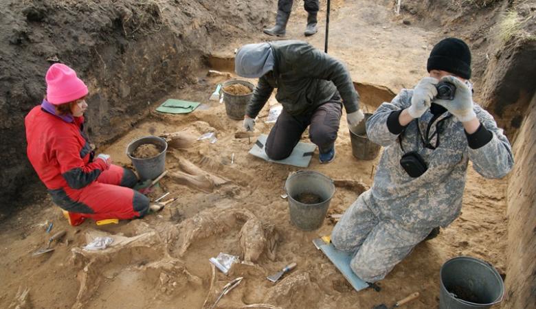 Томские ученые раскопали крупнейшее в Азии кладбище мамонтов