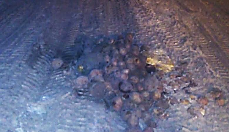 В Омске ямы на дорогах заделывают картошкой