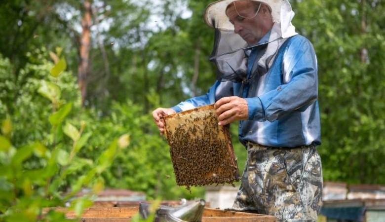 Алтайский губернатор поручил помочь пчеловодам из-за массовой гибели пчел