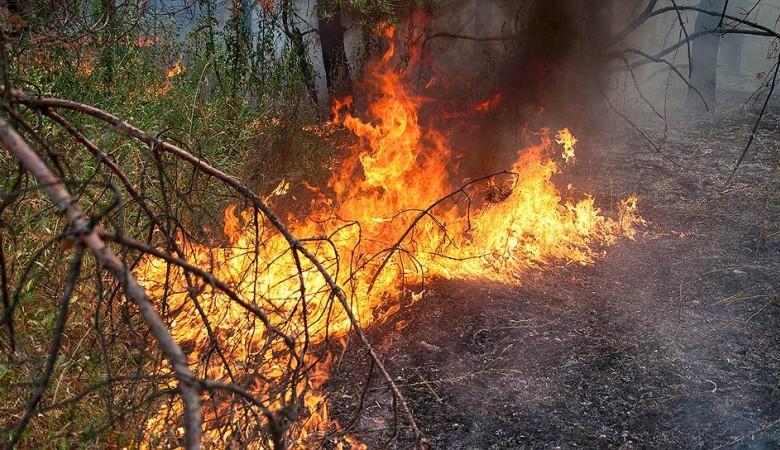 Из-за пожаров на Байкале день сменился ночью