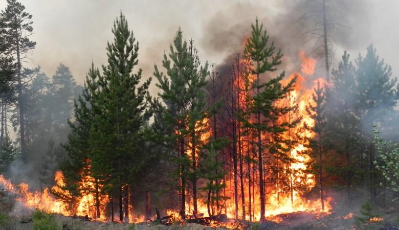 Площадь лесных пожаров в Красноярском крае превысила 740 тыс. га