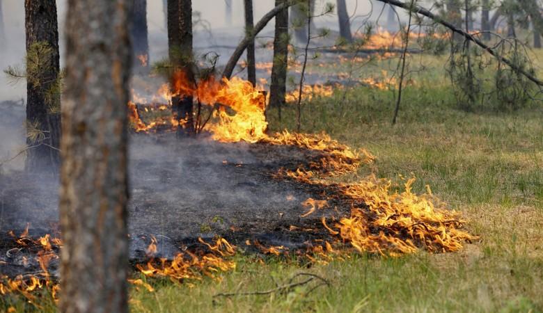 Власти Бурятии считают, что дым в республику принесло из соседних регионов