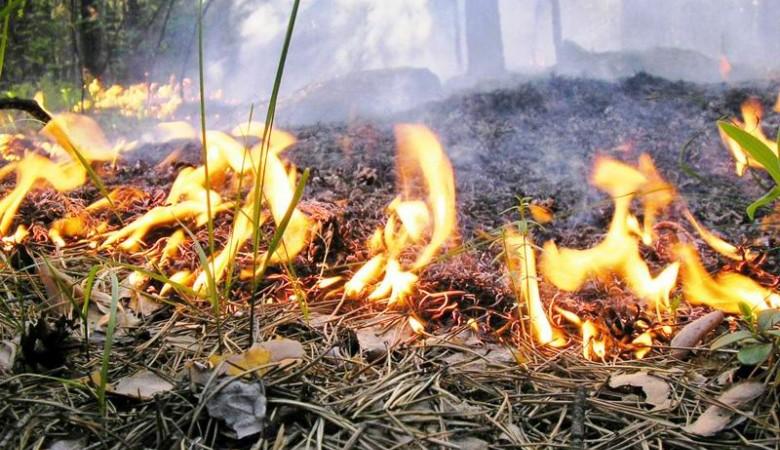 Томскую область затянуло дымом от лесных пожаров в Красноярском крае