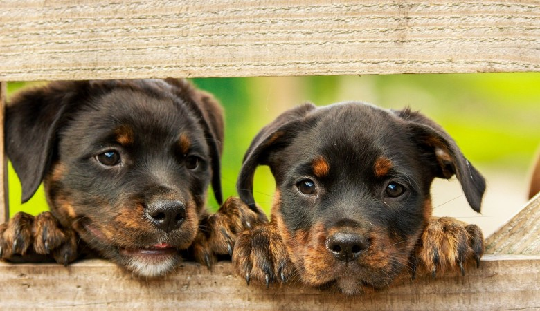 На Алтае возбудили уголовное дело на живодерку, поедавшую собак
