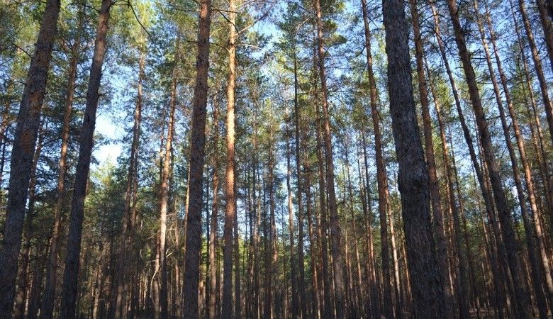На Урале многодетную семью оштрафуют за попытку скрыться от коронавируса в лесу