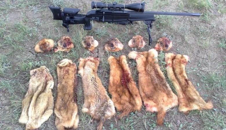 На Алтае из-за чумы запретили охоту на сурка