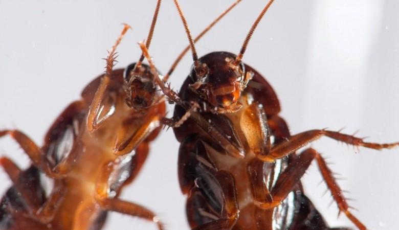 Частный детсад с павшими и живыми тараканами на кухне закрыли в Кемерово