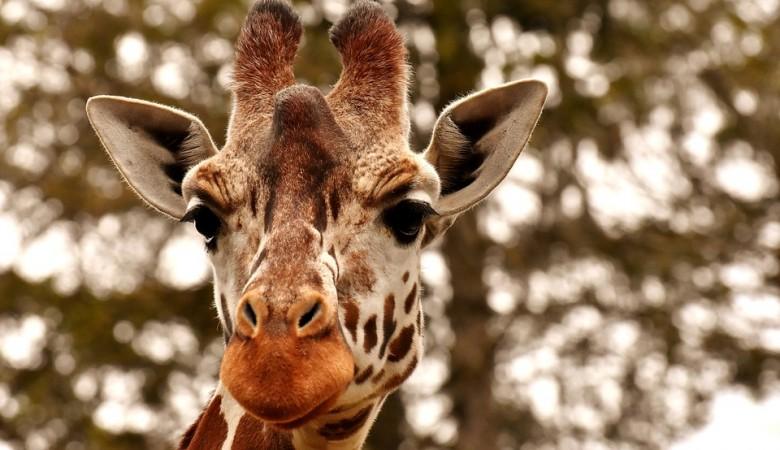 Новосибирский зоопарк требует снести три жилых дома ради жирафов
