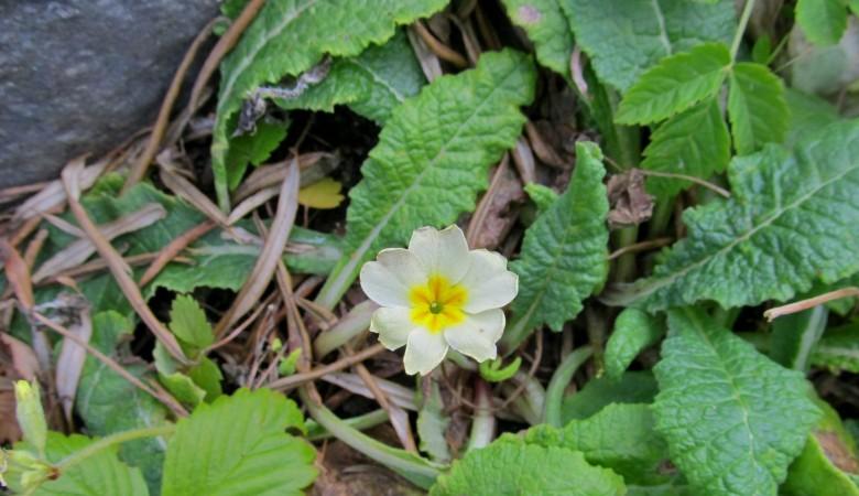 Вторая весна наступила в Алтайском заповеднике