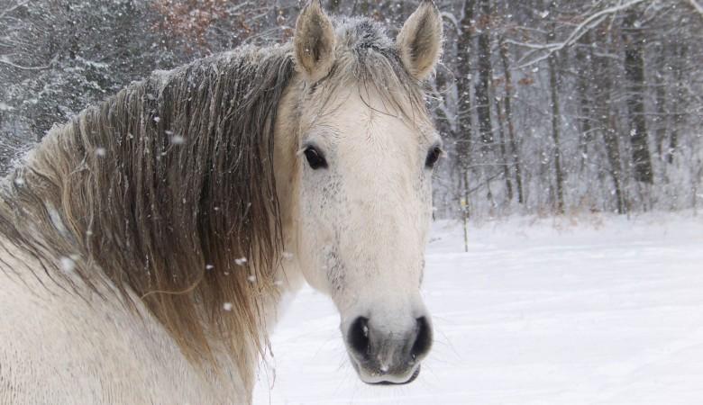 На Алтае конь насмерть задавил женщину