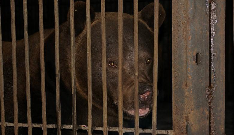 Аман Тулеев распорядился кормить медведей