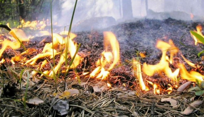 На Алтае введен особый противопожарный режим