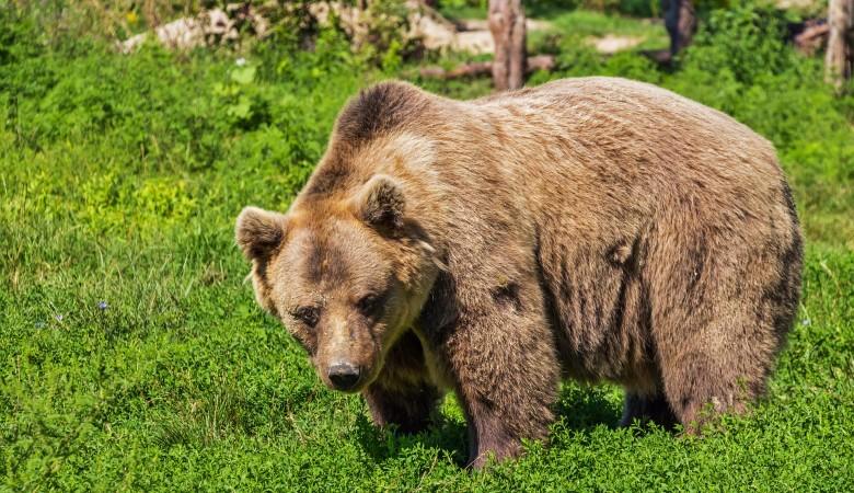 В природном парке Красноярска «Ергаки» усилено патрулирование после нападения медведя