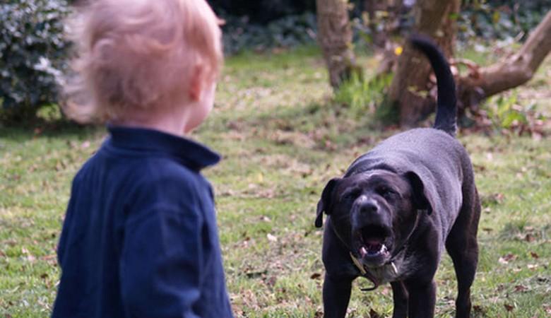 В Бурятии сторожевой пес насмерть загрыз малолетнего ребенка
