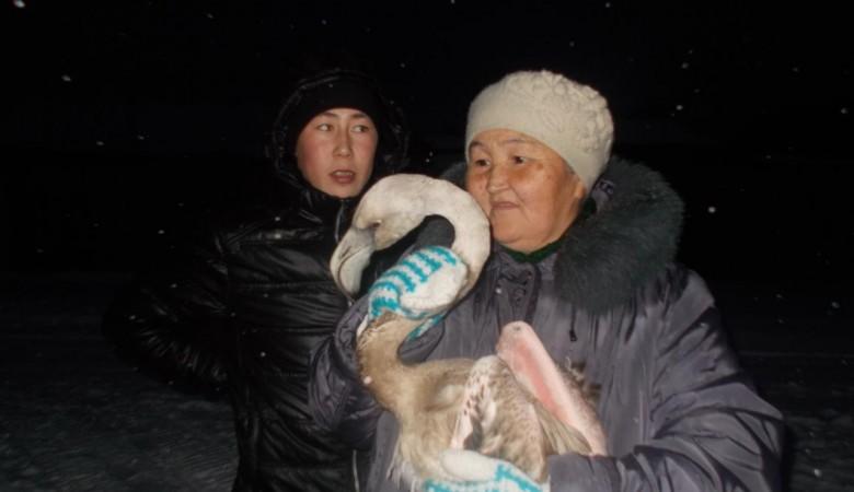 На севере Красноярского края нашли заблудившегося фламинго
