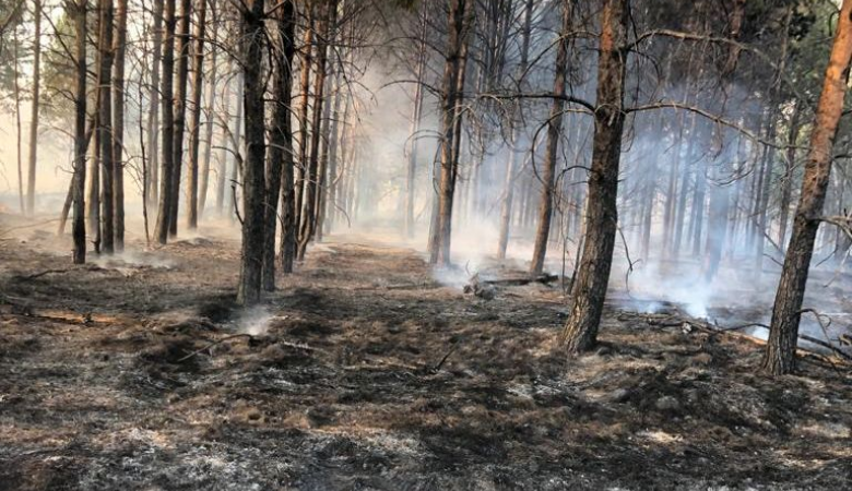 В Омской области продлили запрет на посещение лесов