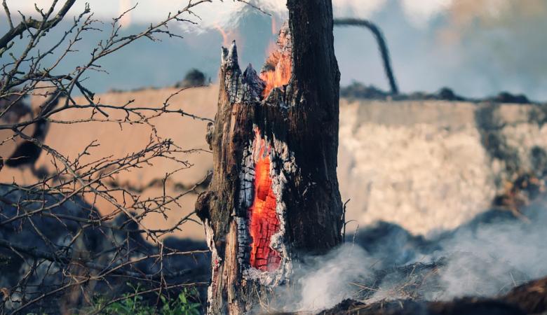 На Алтае отменили действие особого противопожарного режима