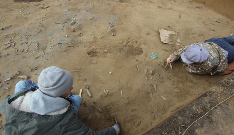 Археологи нашли метровый бивень мамонта в Красноярске