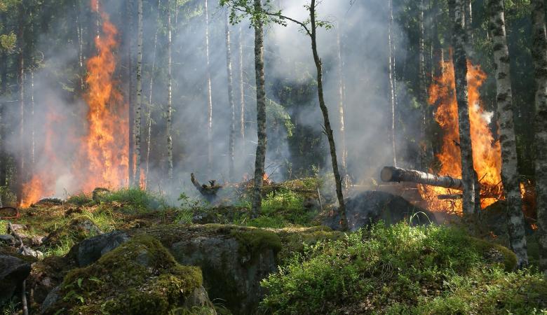 Более десяти лесных пожаров остаются действующими в Красноярском крае