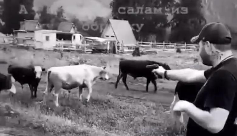 Прокуратура проверяет ролик, где мужчина стреляет по пасущимся коровам на Алтае