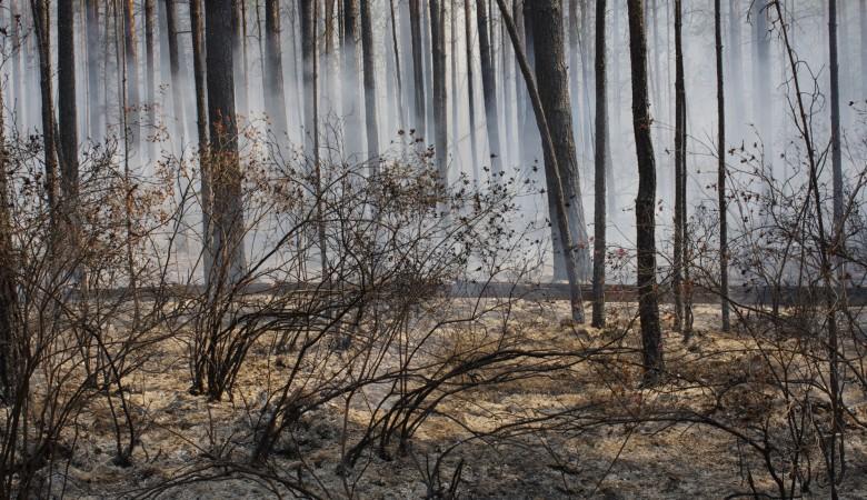 Особый противопожарный режим введен в Иркутской области