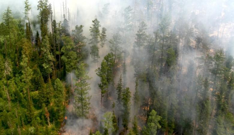 Первый в 2016 году лесной пожар зафиксирован на Алтае