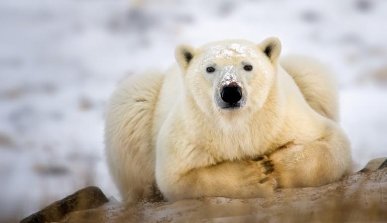 Жительнице Абакана, выложившей в Сеть видео об убийстве медведицы, угрожают