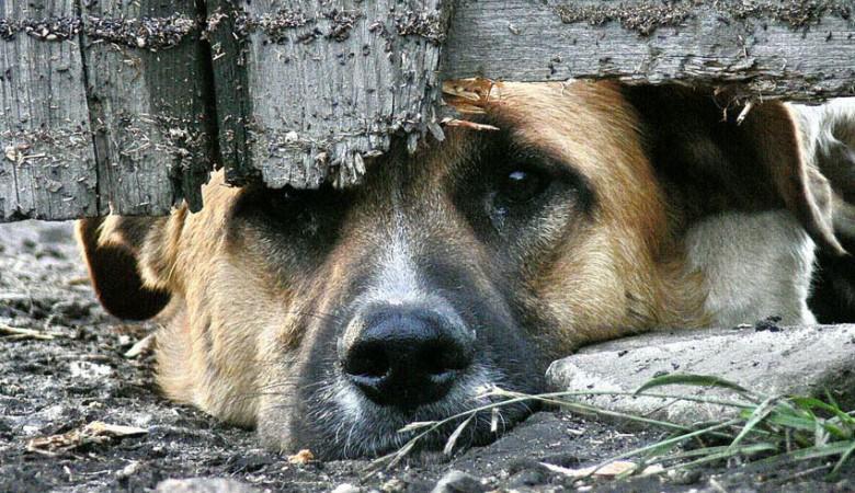 В Кузбассе мужчина вышвырнул собаку с 4-го этажа на глазах своих детей