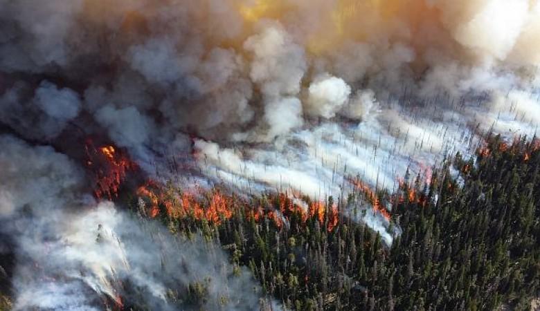 В Красноярском крае за сутки ликвидировали лесные пожары на площади более 7 тыс. га