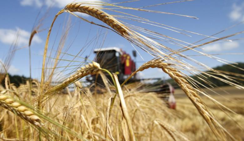 В Красноярске начался отбор экспортеров, желающих поставлять зерно в КНР