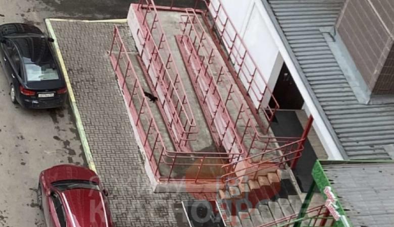 Неизвестный выбросил кошку с 14-го этажа в Красноярске
