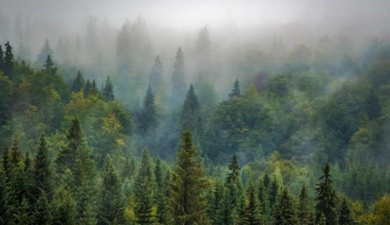 На Алтае нашли сборщика орехов, который неделю блуждал по лесу