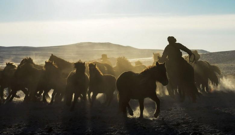 Полиции в горах Алтая пришлось на вертолете догонять табун лошадей, украденный по заказу