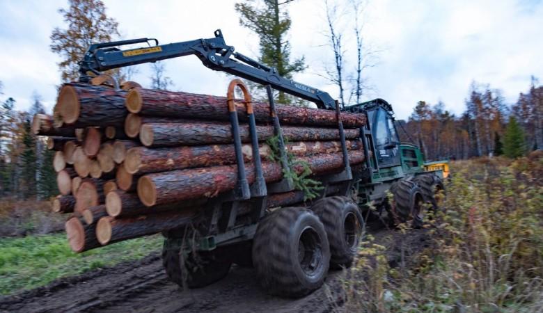 Объем незаконных рубок леса в Хакасии снизился на 45% - власти